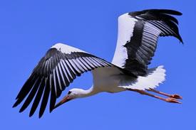 present-storks.jpg